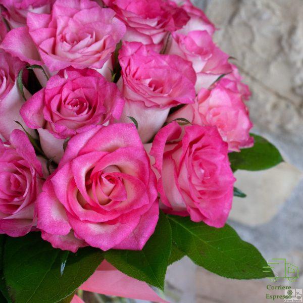 Particolare di rosa rosa