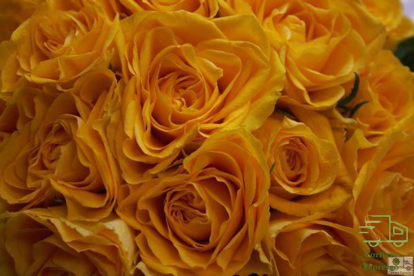 Particolare rose gialle