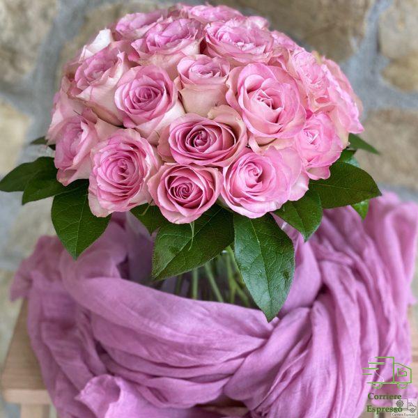 Rose bicolore, bianche e rosa