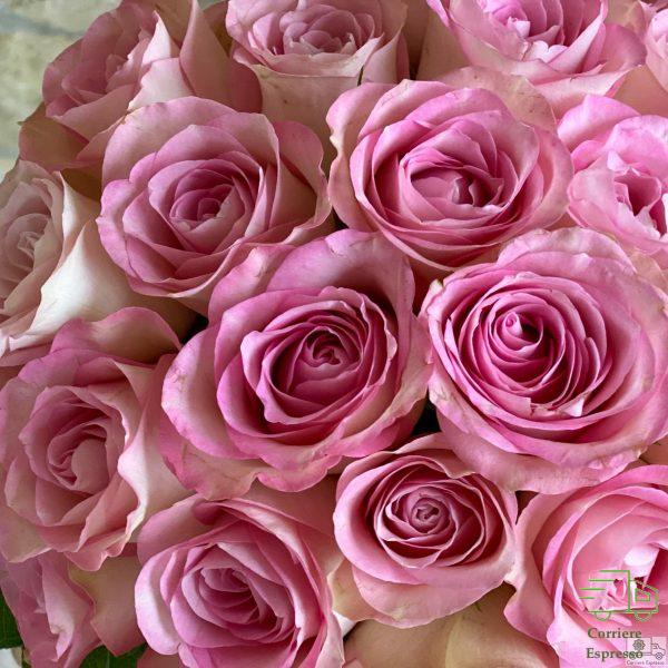 Particolare Rose bicolore, bianche e rosa